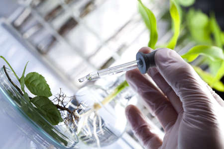 plant science: Scientist working in a laboratory and plants