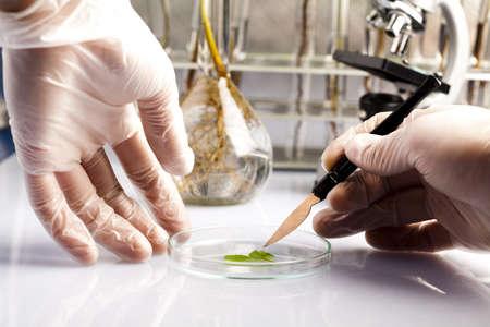 experimento: Cient�ficos que trabajan en un laboratorio y plantas