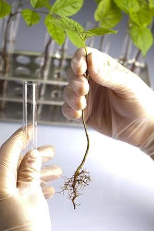 Biotechnology Stock Photo - 7386037