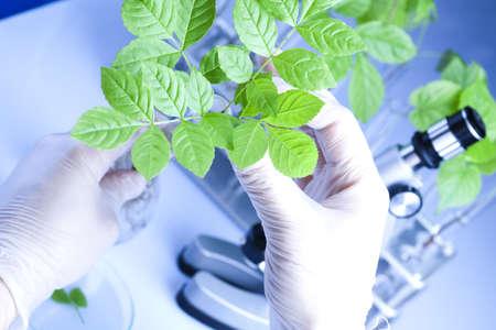 Scientist  samples of  super grow plants