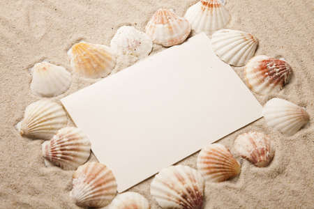 mollusc: Frame from holidays Stock Photo