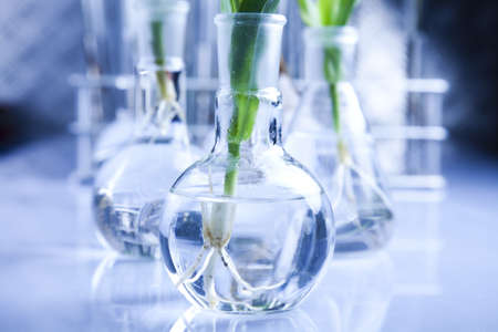 pipeptte: Floral  in blue laboratory  Stock Photo