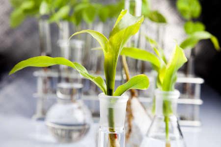 Samples of  super grow plants