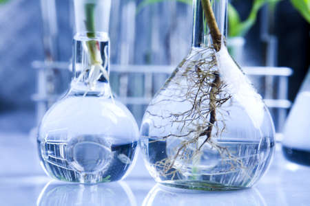 Working in a laboratory and plants Stock Photo - 7512379