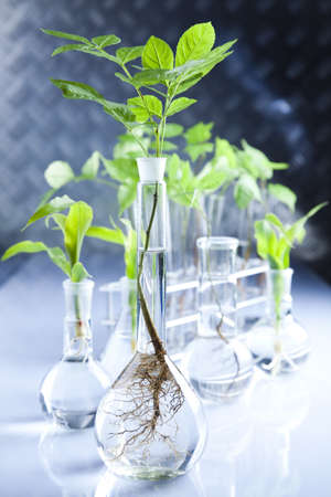 science lab: Experimenting with flora in laboratory  Stock Photo