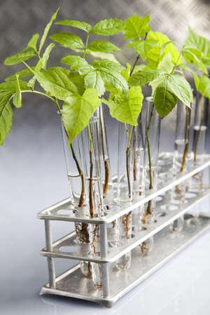 Biotechnology Stock Photo - 7512402