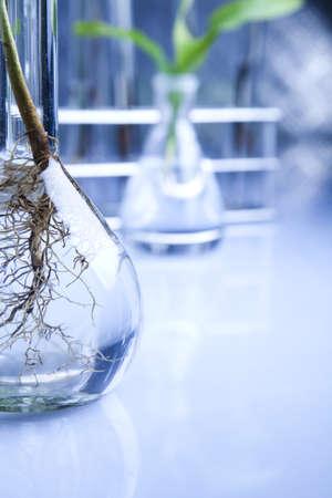 Plants  and laboratory  photo