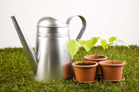 seed pots: Watering Can