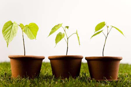 wellingtons: Plants