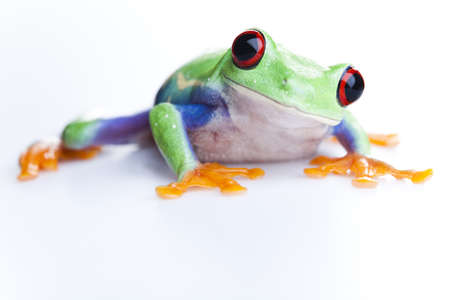 blue frog: Peque�a rana Foto de archivo