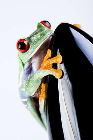 Rocket frog photo