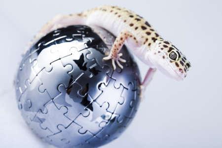 Gecko in globe photo