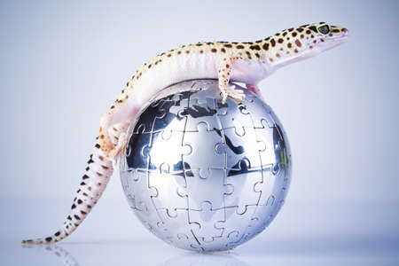 Globe in gecko photo