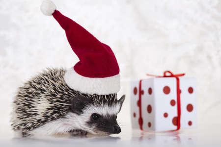 Hedgehog christmas Stock Photo - 8252427