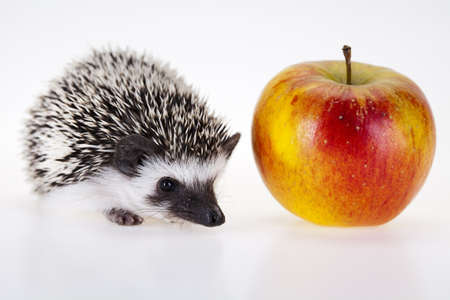 Hedgehog with apple Stock Photo - 8252519