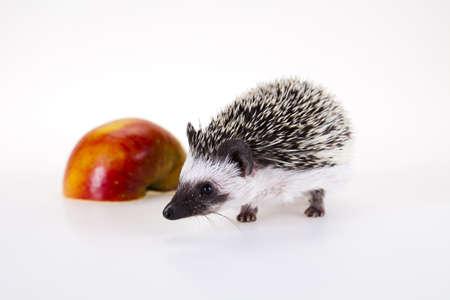 Hedgehog with apple photo