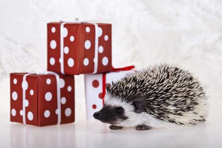 Hedgehog christmas Stock Photo - 8252438