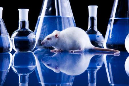 flask: Rat