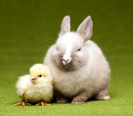 Happy Easter animal photo
