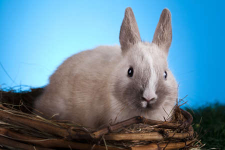 Easter. The bunny with a blue background photo