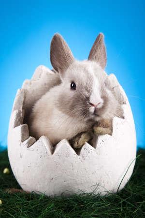 Little bunny, Easter Stock Photo - 9118648