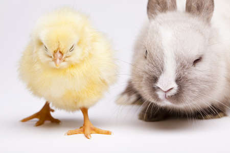 Easter Chick and bunny photo