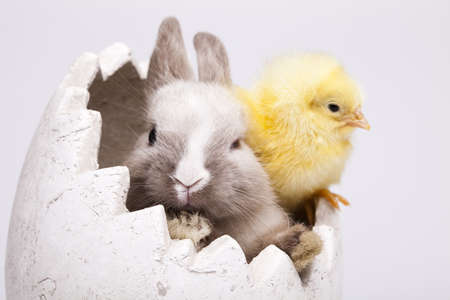 Chick and bunny Stock Photo - 9118826