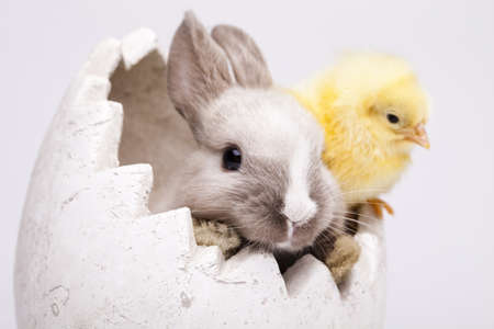 Chick and bunny Stock Photo - 9118331