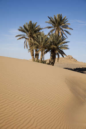 merzouga: Moroccan desert dune, merzouga