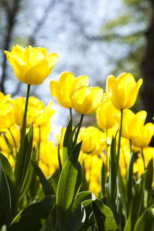 Flowers Stock Photo - 9966894