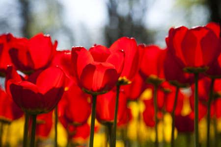 Spring in garden photo