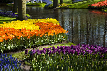 Garden Stock Photo - 9952526