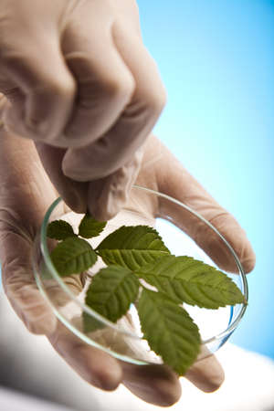 epidemiology: Floral science in  laboratory  Stock Photo