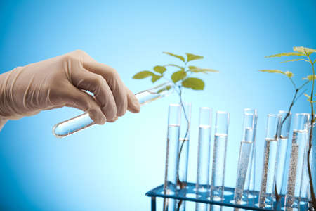 agricultural engineering: Test tubes with plants