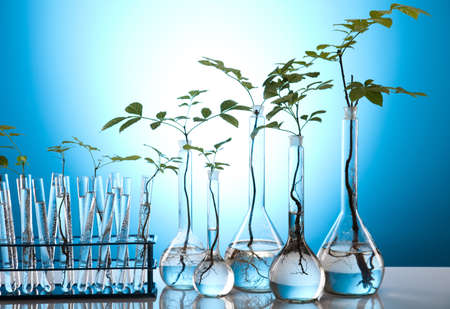 agricultural engineering: Floral science in  laboratory  Stock Photo