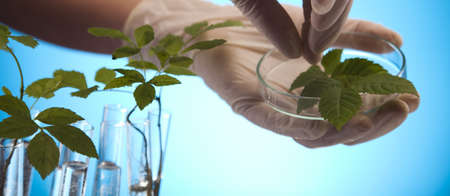 agricultural engineering: Close-up of plants in test tubes aboratory
