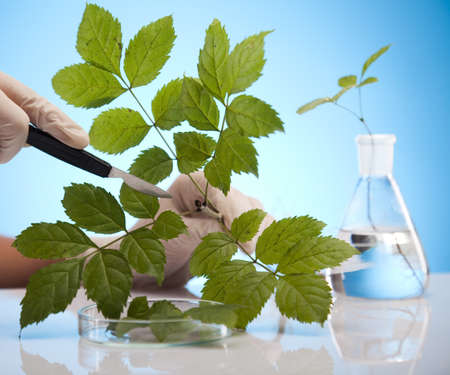 agricultural engineering: Plant laboratory