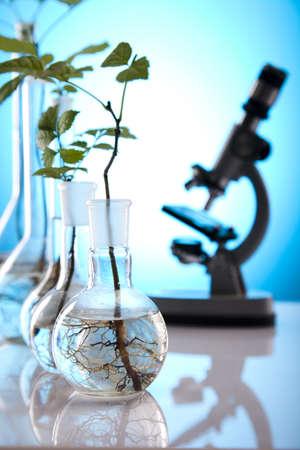 genomics: Test tubes with plants