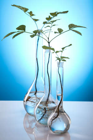 Close-up of plants in test tubes aboratory Stock Photo - 10078366