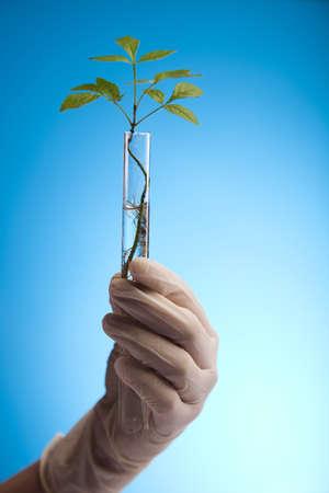 genomics: Ecology laboratory experiment in plants Stock Photo