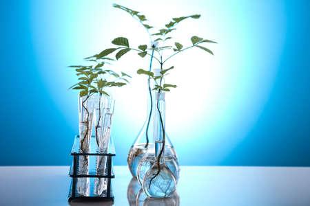 genomics: Plants in test tubes in  laboratory