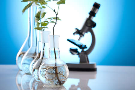 Experimenting with flora in laboratory  Stock Photo