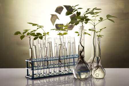geneticist: Close-up of plants in test tubes aboratory