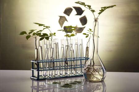 reciclar vidrio: Las plantas en tubos de ensayo en laboratorio
