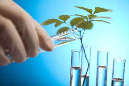 epidemiology: Plants in test tubes in  laboratory