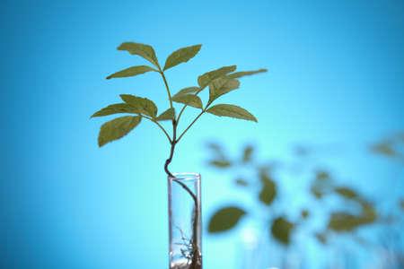 genomics: Laboratory glassware containing plants in laboratory