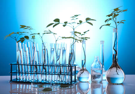 Plants in test tubes in  laboratory  photo