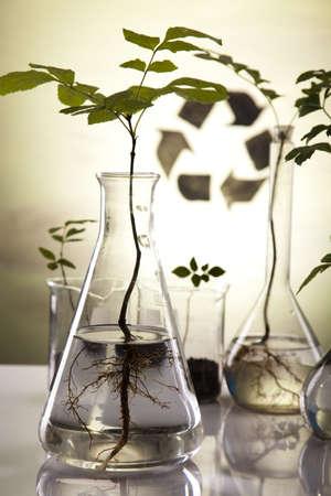material de vidrio: Plantas en tubos de ensayo en laboratorio  Foto de archivo