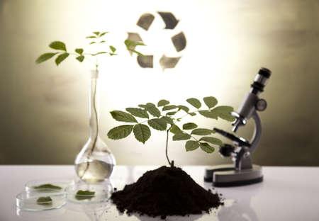 cristalería: Experimentando con flora en laboratorio