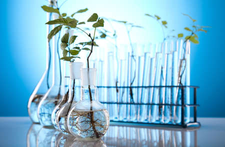 Close-up of plants in test tubes aboratory Stock Photo - 10078734